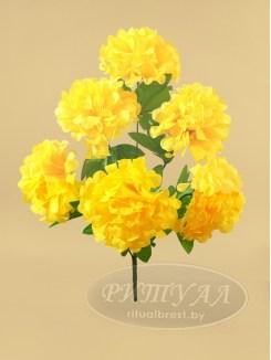 Хризантема КАРОЛИНА